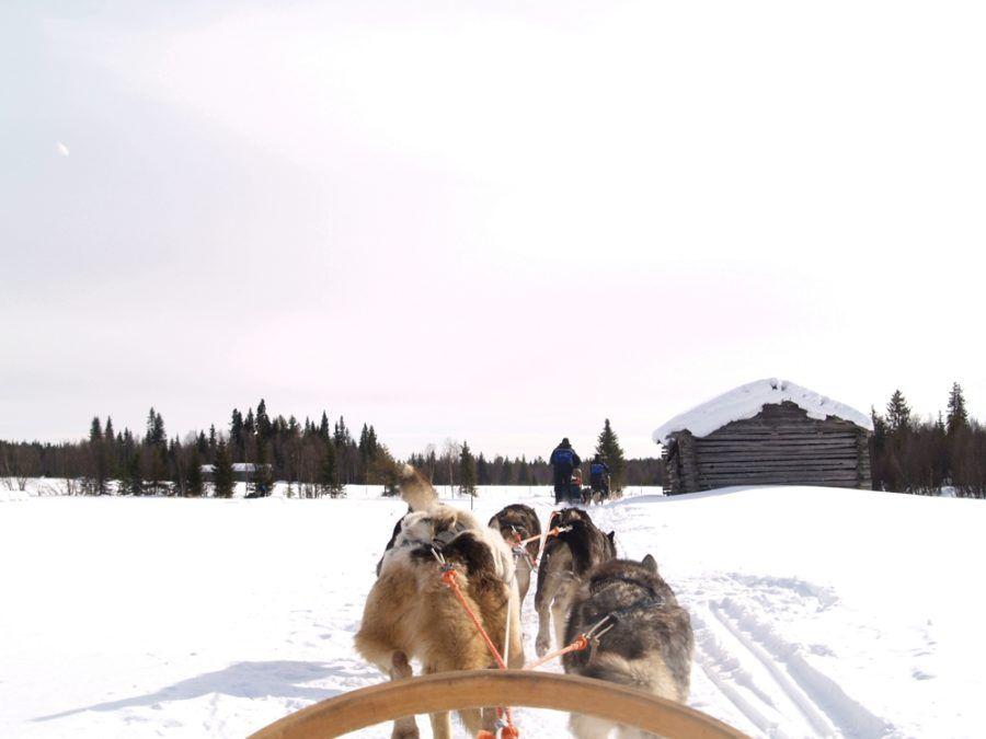 Viajes aventura turismo activo carreras perros husky