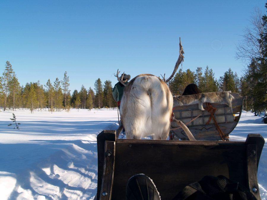 viajes Laponia excursión renos familia niños