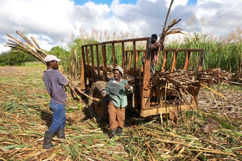 Reportaje de viaje de República Dominicana para mujeres cultura local caña de azúcar