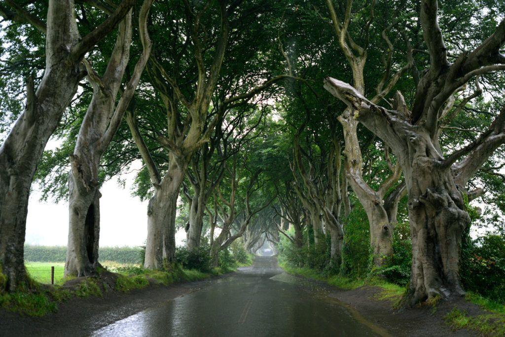 Dark Hedges Juego de Tronos Irlanda del Norte