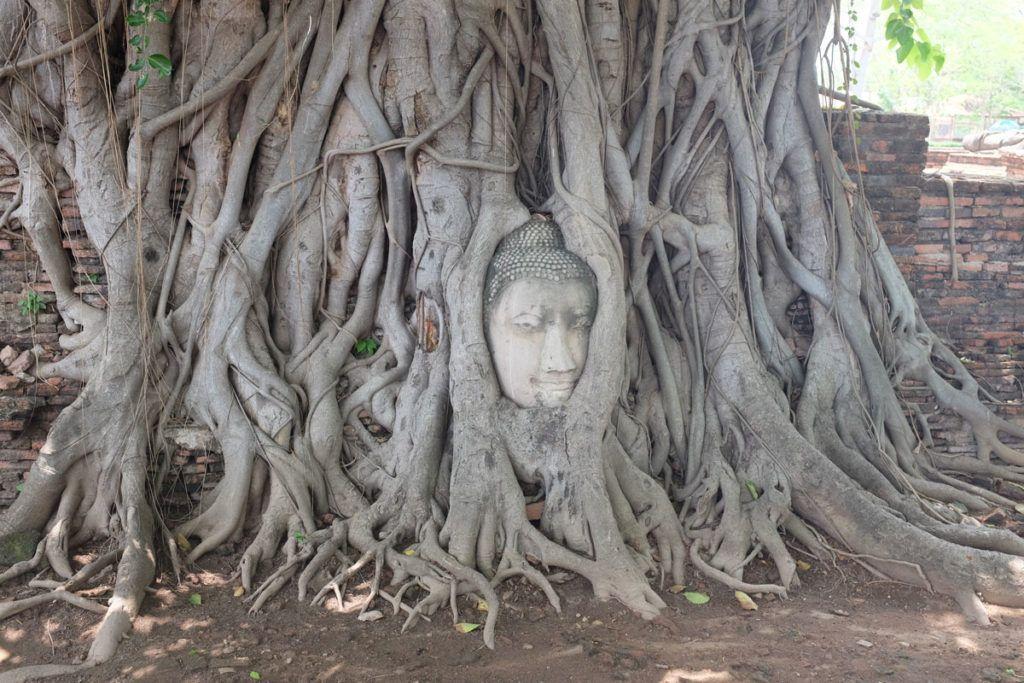 Cabeza de Buda de Wat Phra Mahathat
