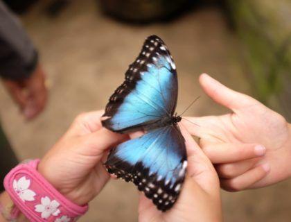 viajes a Costa Rica, una maleta para Costa Rica, mariposas, viajes en familia