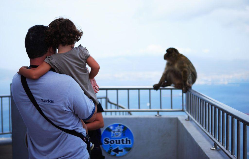 monos de gibraltar, viajes en familia