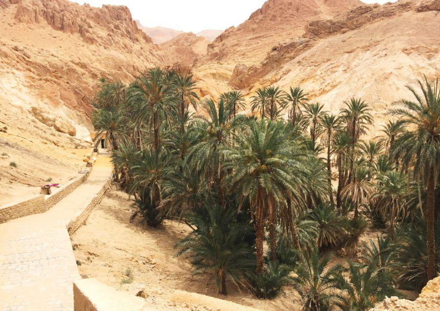 Ruta por el desierto de Túnez Oasis Chebika