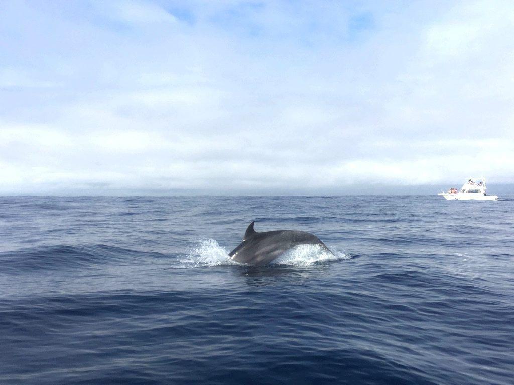 Terceira en familia Azores Portugal delfim