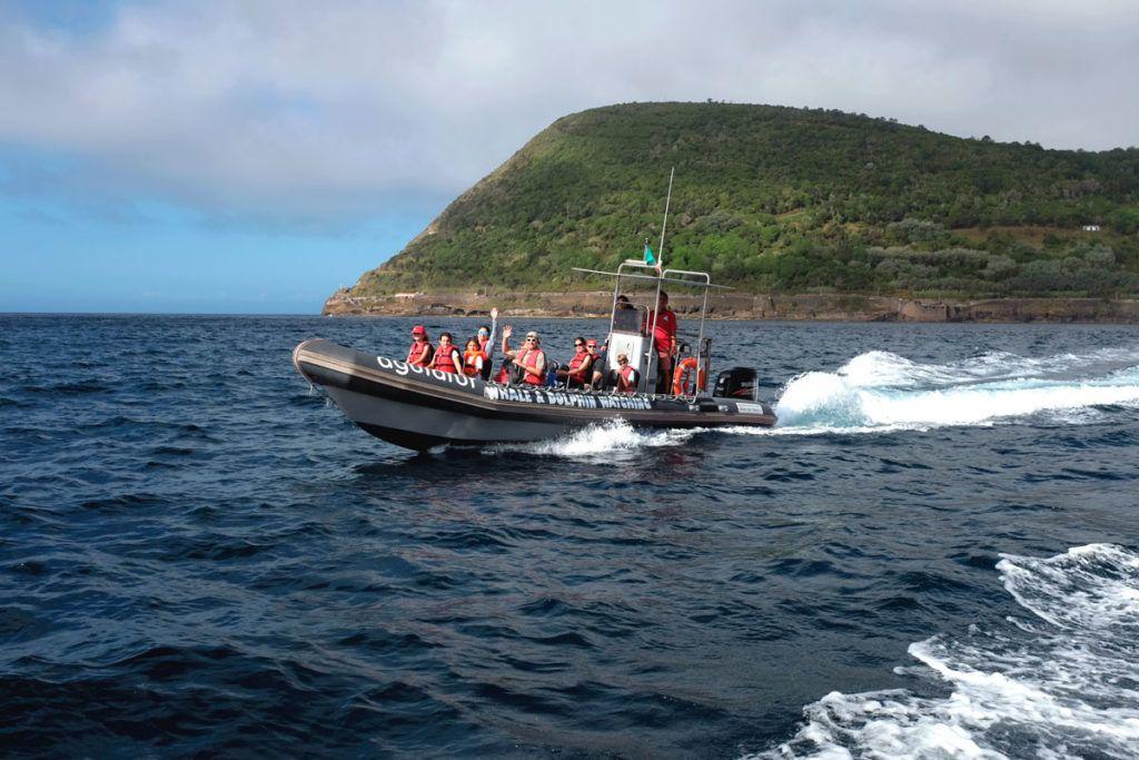 Ballenas delfines Azores lancha rapida viaje familia niños