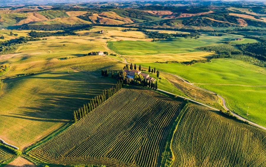 viñedos en Toscana