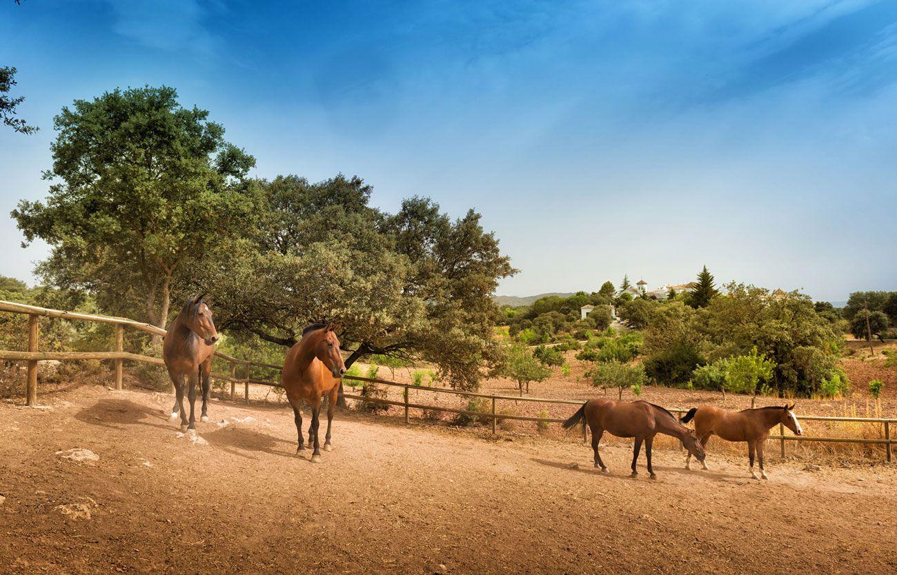 caballos cerca hotel La Bobadilla granada