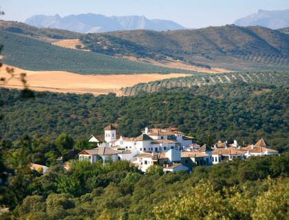 Granada olivos naturaleza relax