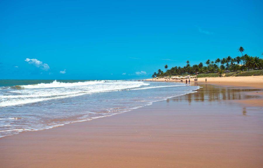 playas praia do forte palmeras brasil