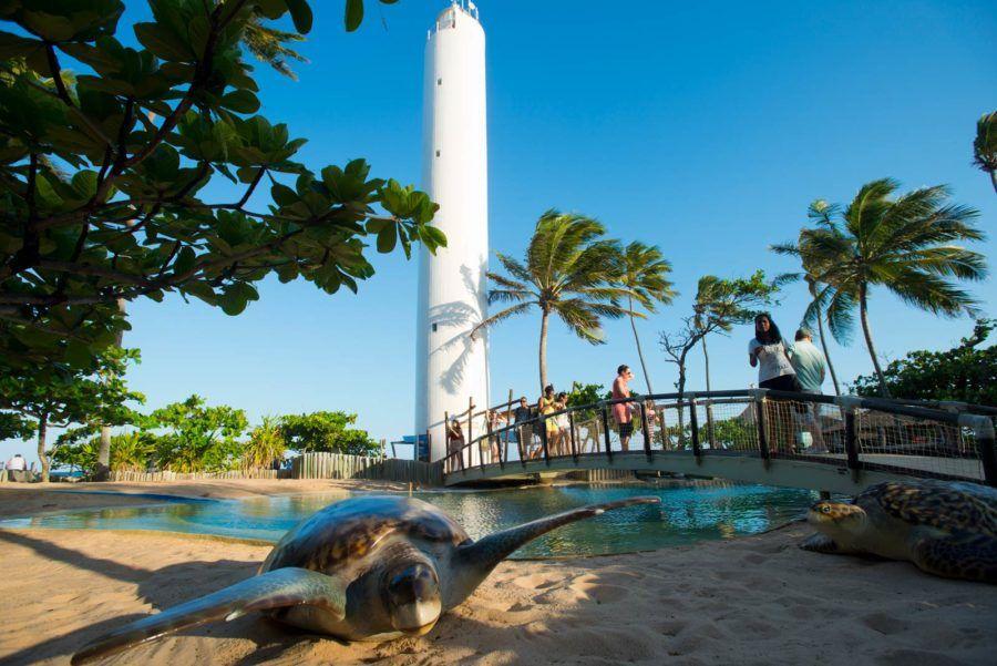 proyecto tamar tortugas marinas brasil