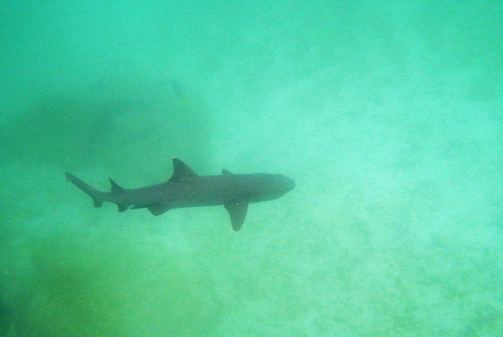tiburon islas galapagos buceo aventura