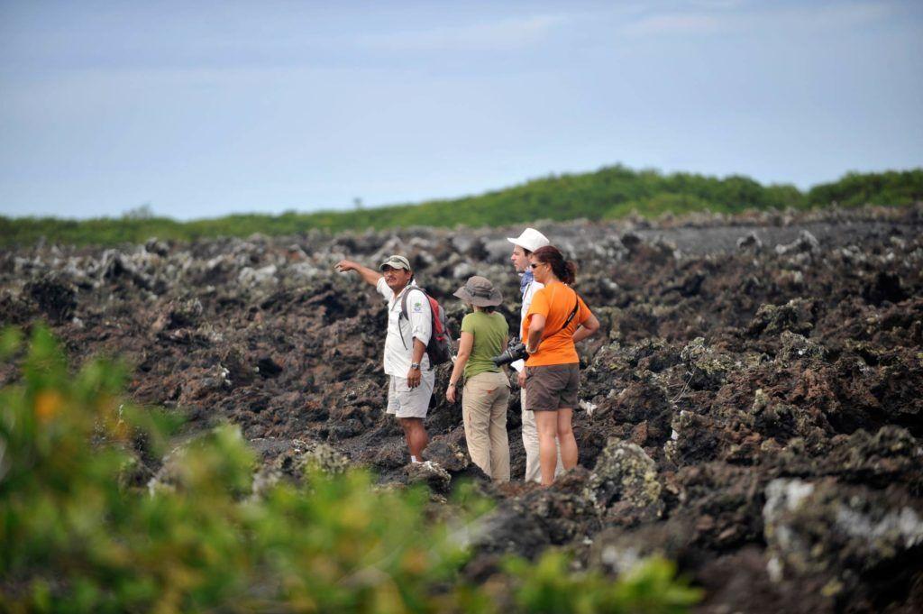 tintoreras islas galapagos
