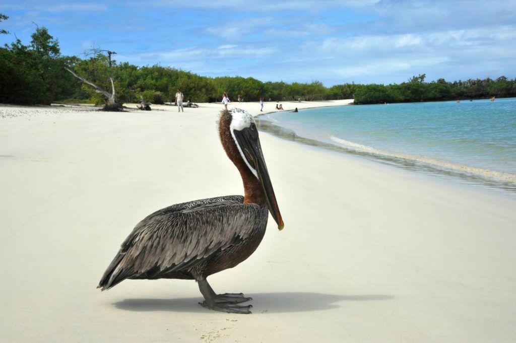 playa islas galapagos