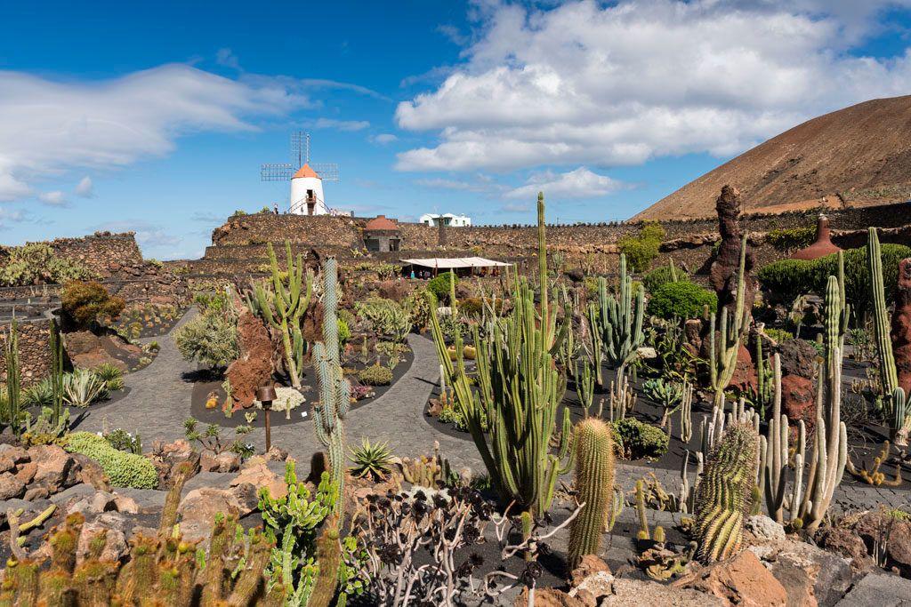 jardin de cactus un plan en lanzarote con amigas