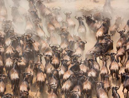migracion ñus, viajes etheria, viaje kenia, viajes mujeres
