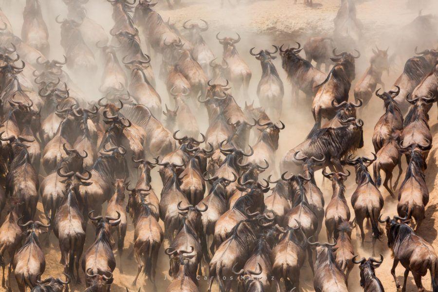 que ver en kenia reserva masai mara
