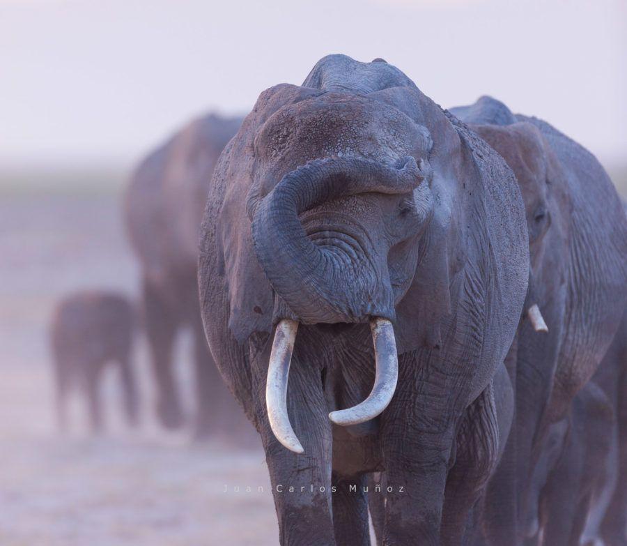 que ver en kenia Parque Nacional de Amboseli