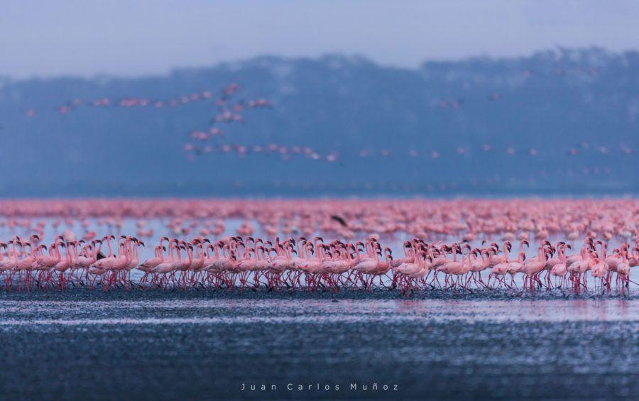 flamencos en lago nakuru, viaje kenia mujeres, que ver en nakuru