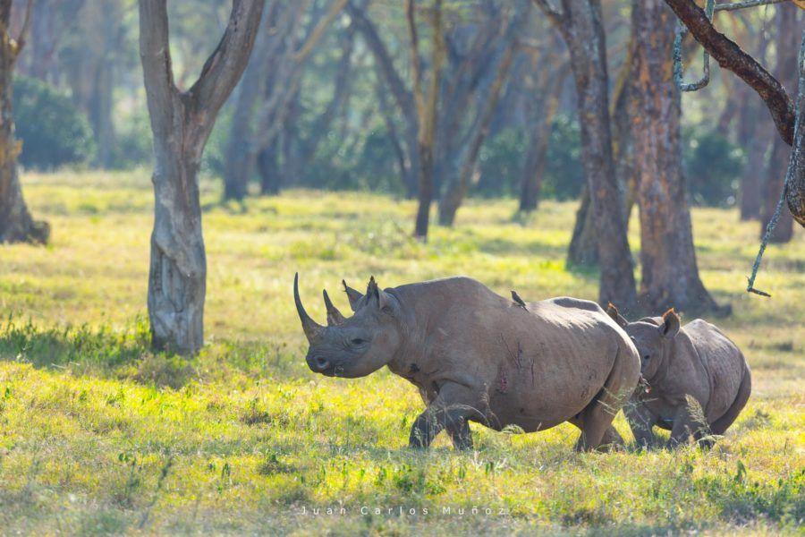 rinocerontes en kenia, viajes mujeres kenia
