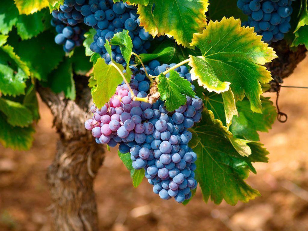vino enologia master of wine Almudena Alberca