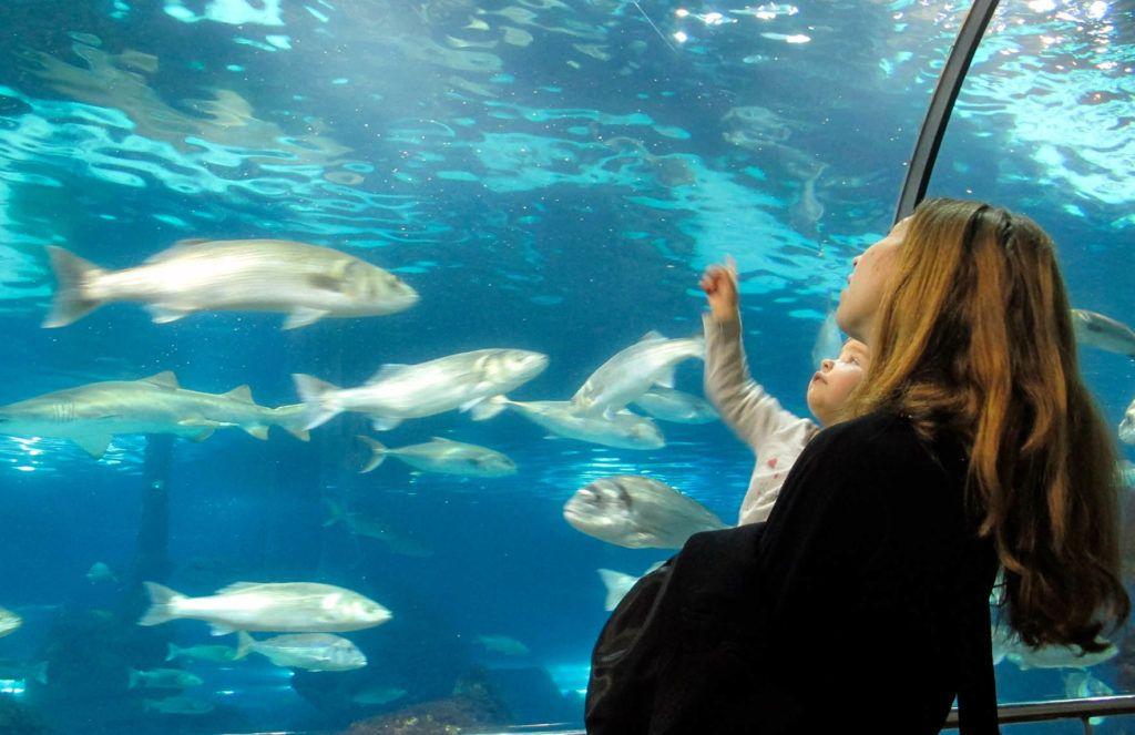 que ver con ninos, aquarium viaje familia