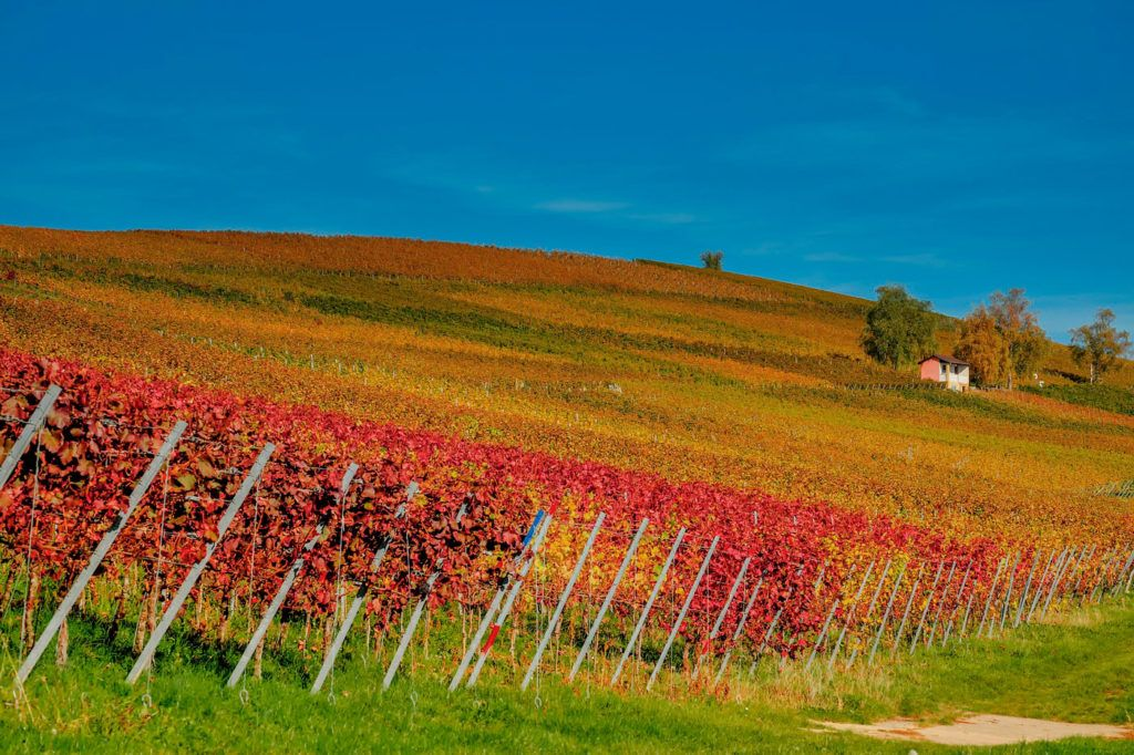 spa vinoterapia bodegas hoteles vino