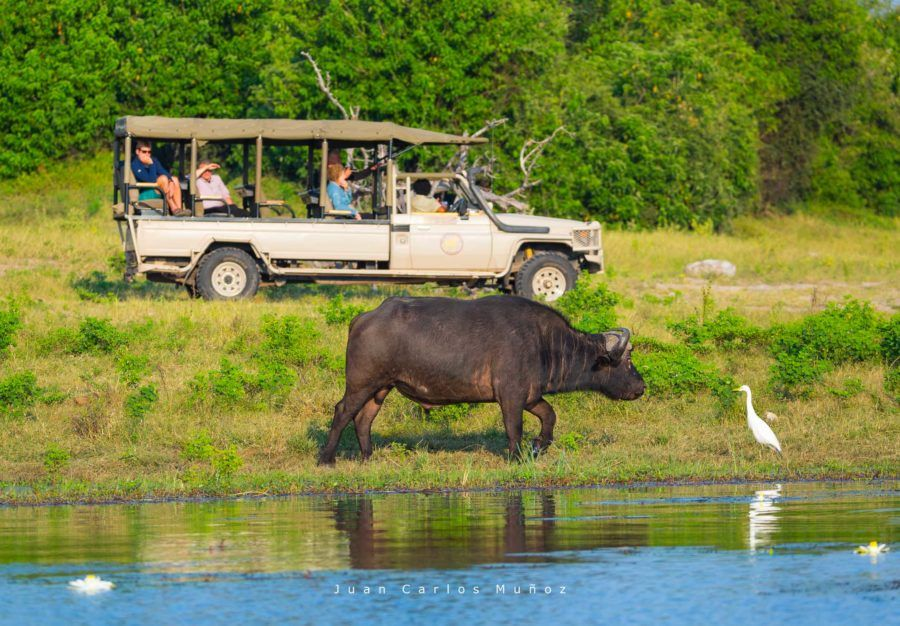 safari parque nacional de chobe, fauna de africa, safaris en bostuana, viajes naturaleza, viajes para mujeres