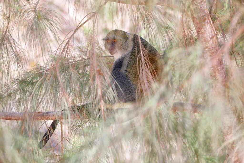 Mono azul, viaje de mujeres zanzibar, que ver en zanzibar, visitas en zanzibar