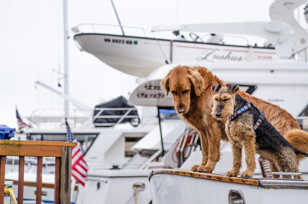 mascotas en cruceros, perros en viajes cruceros