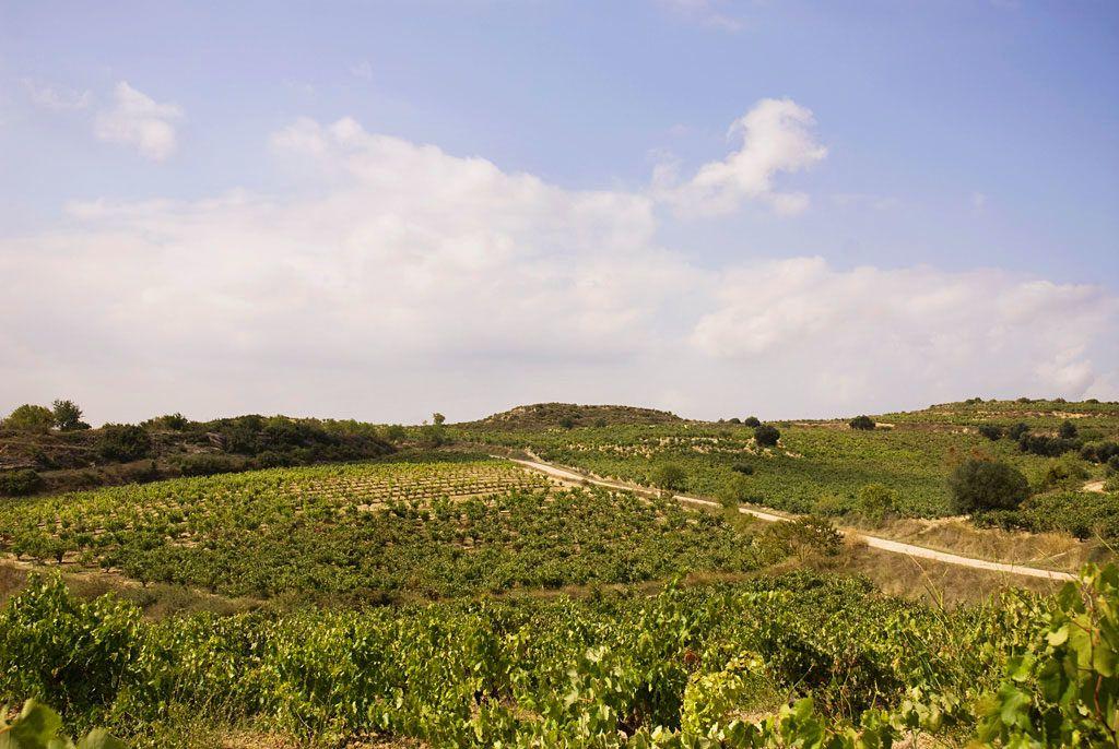 enologia rioja uvas viajes gourmet