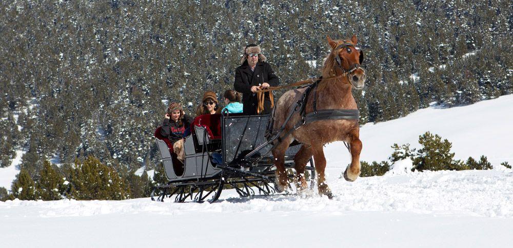 trineo de caballos, nieve sin esquiar, que hacer en la nieva si no esquias