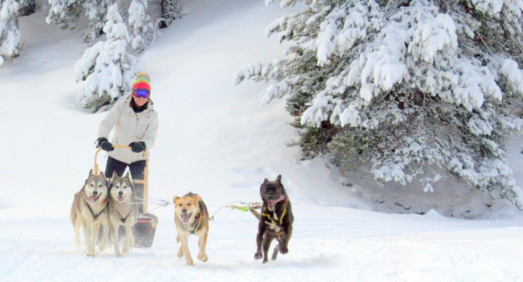 trineo tirado por perros, nieve sin esquiar, que hacer en la nieva si no esquias
