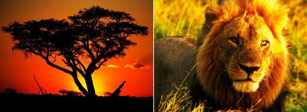 Parque Nacional de Hwange, mujeres viajeras, viajes mujeres zimbabue, mujeres etheria