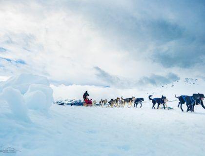 trineo de perros, nieve sin esquiar, que hacer en la nieva si no esquias