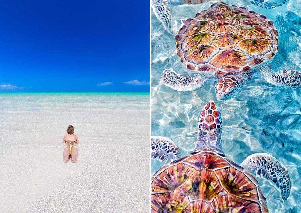 playas de cozumel, tortugas marinas en yucatan