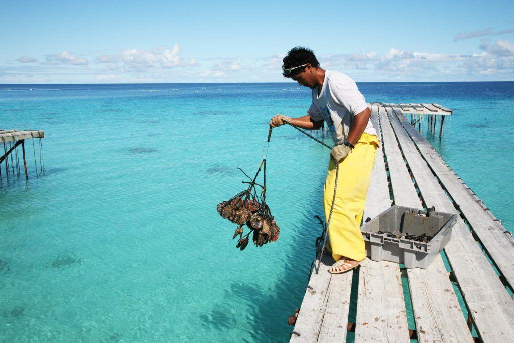 viaje a tahiti, las perlas negras de polinesia