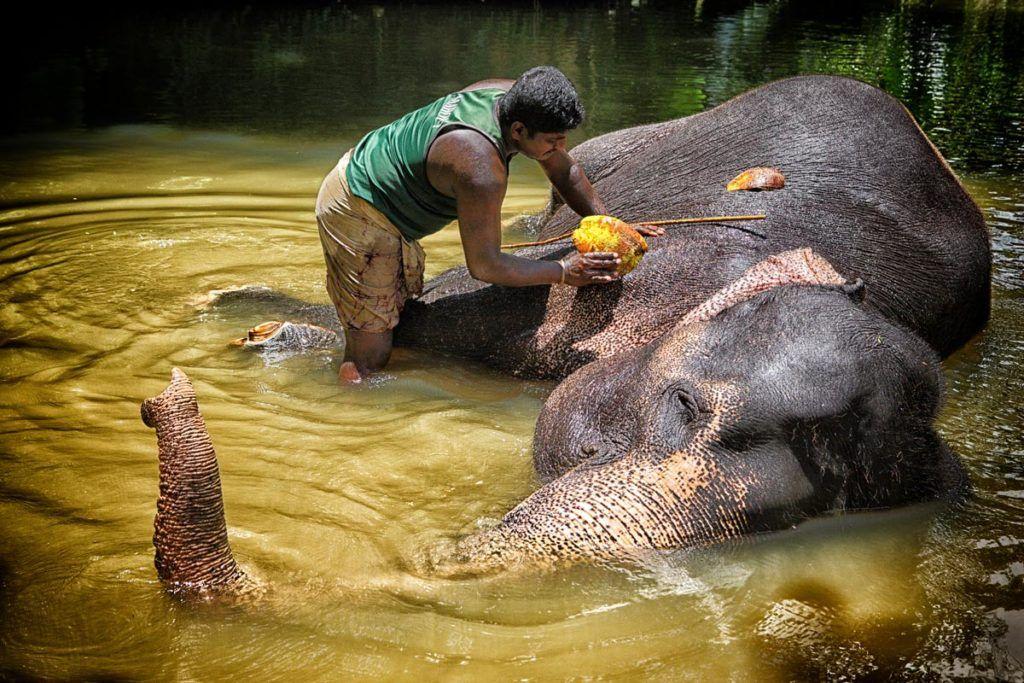 Viaje de mujeres, elefantes en Sri Lanza