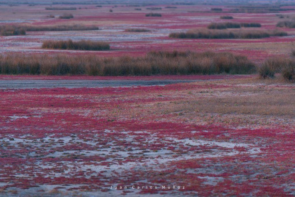 paisajes rumania, viajes al delta del danubio, visitas en delta danubio