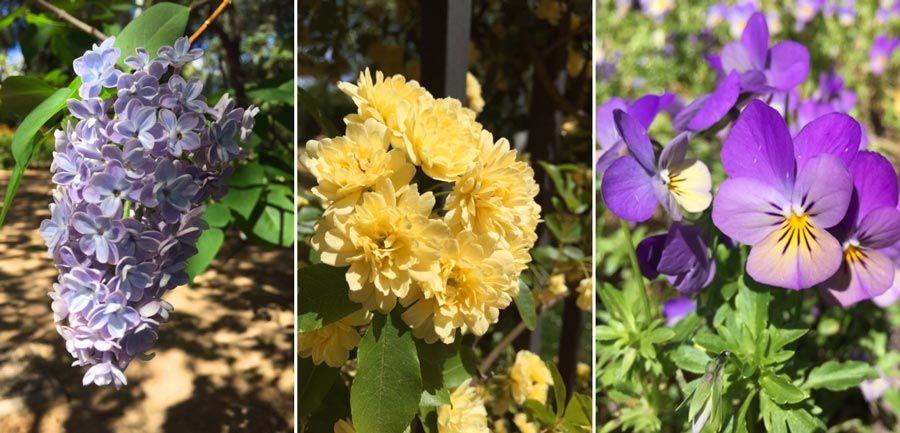 quinta los molinos, floracion almendros, madrid