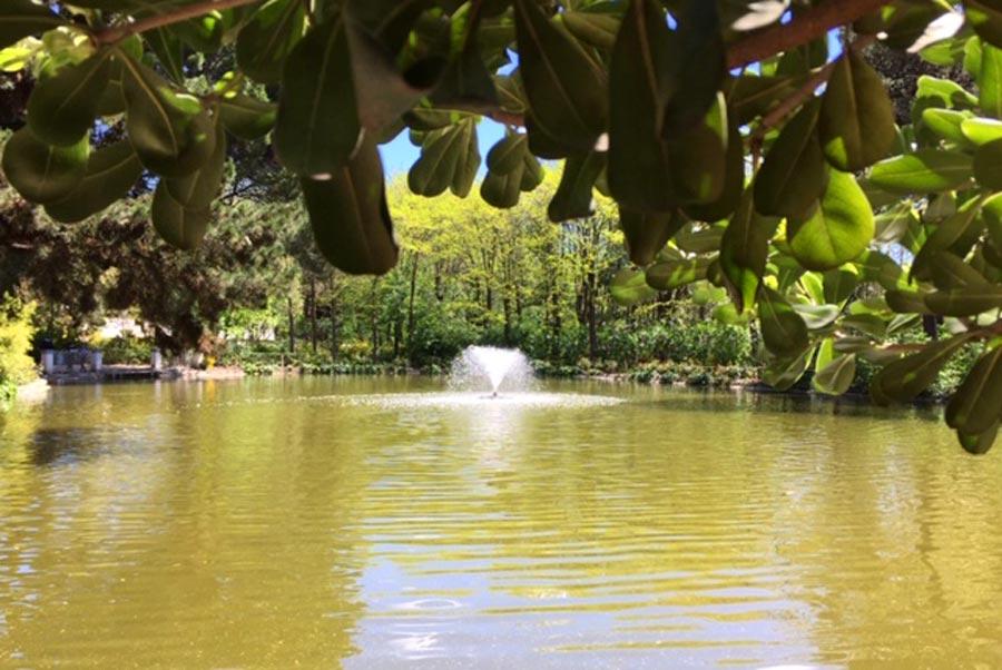 lago quinta los molinos, almedros en flor madrid