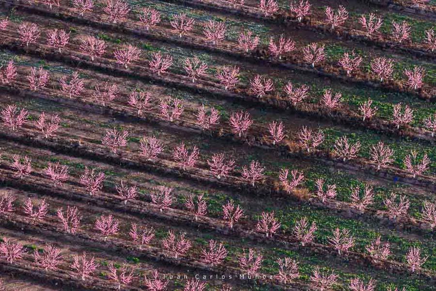melocotoneros floracion, bajo segre, viaje lleida