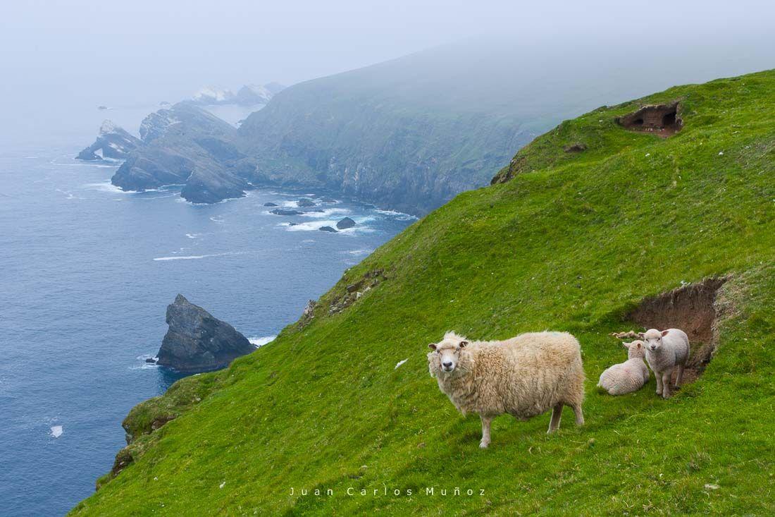 Hermaness Nature Reserve, islas shetland, escocia