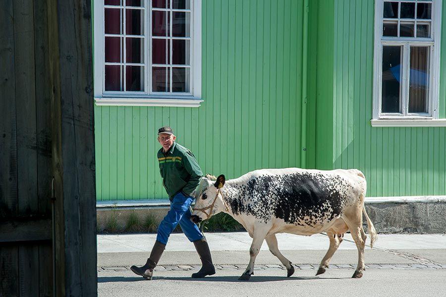 roros, casas de roros, arquitectura noruega