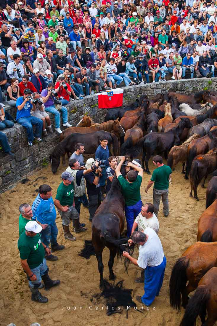 rapa das bestas, Sabucedo, fiestas de verano en galicia