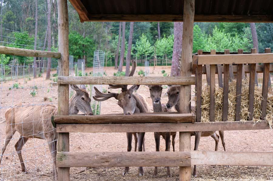 Parque Biologico da Serra da Lousa
