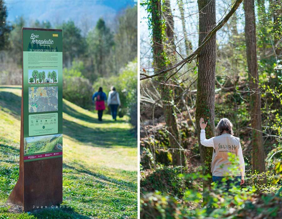 Spending time in forest, Nature therapy, therapeutic forest, Sant Cristòfol de les Fonts village, La Garrotxa region, La Garrotxa Natural Park, Girona Province, Catalonia, Spain