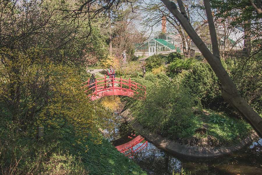 Jardín botánico de Cluj Napoca.