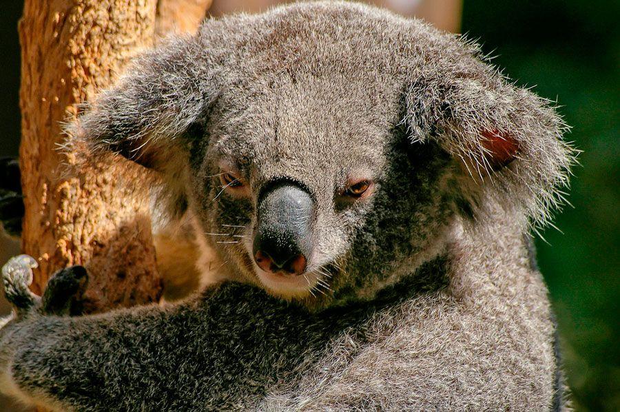 viajes a Australia, viajes de aventura, animales del mundo, animales australianos