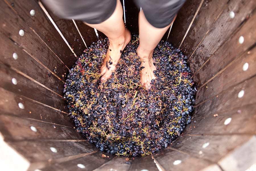 rutas por rioja alavesa, vendimia, pisar las uvas